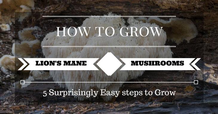 mushroom wisdom super lion's mane  120 veggie tabs